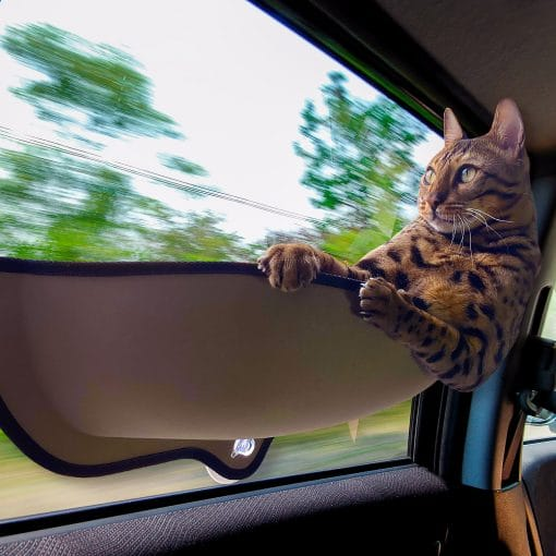 cat car window seat