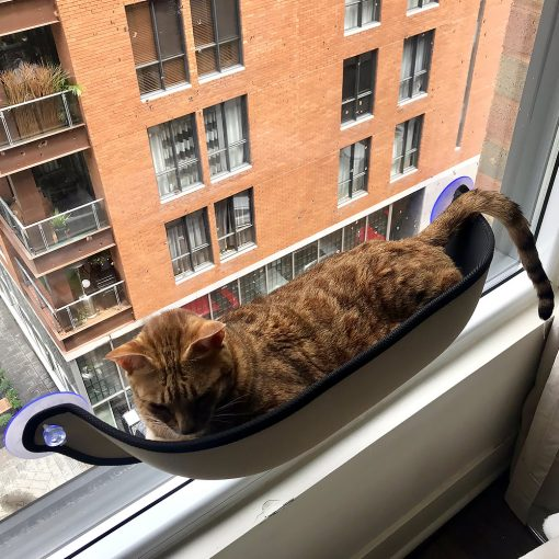 cat sleeping window seat