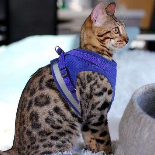 Gilet de harnais réfléchissant Katkin pour chats