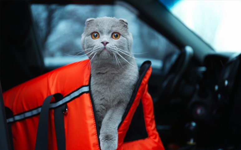 11 Tips for Traveling With a Cat in a Car